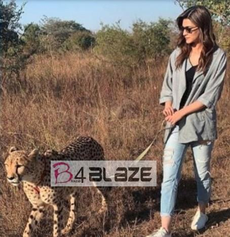 Kriti Sanon with Cheetahs