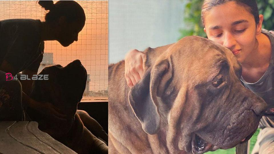 Alia Bhatt sharing time with Ranbir Kapoor's doggie, photo are viral