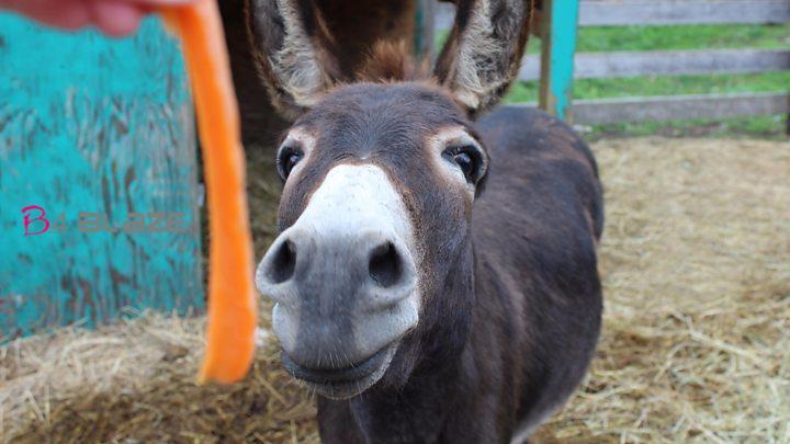 donkey milk 1